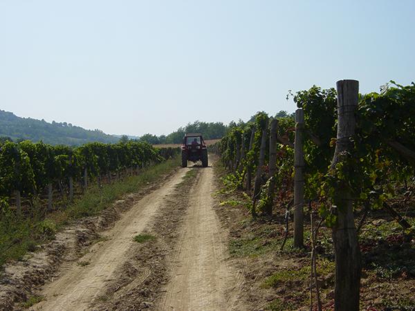 winnica-traktor