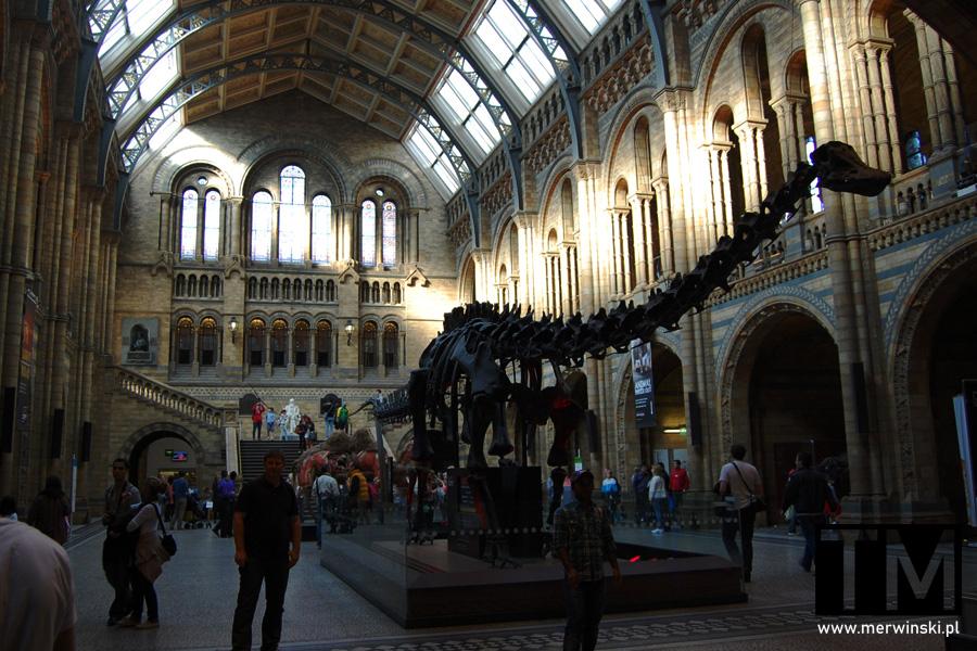 Kości dinozaura w Muzeum Historii Naturalnej w Londynie