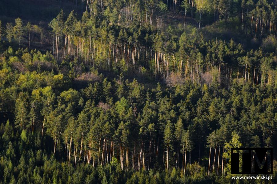 Las widziany ze szlaku na Radunię