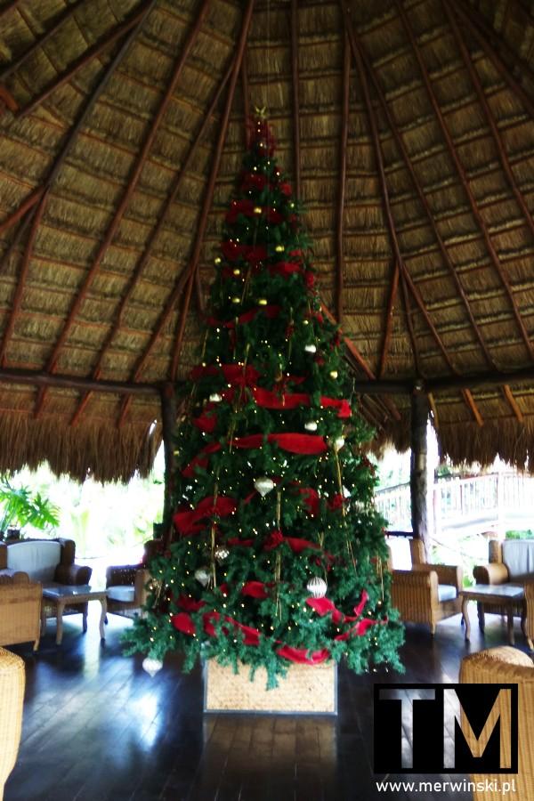 Choinka w Akumal Bay Resort w Meksyku