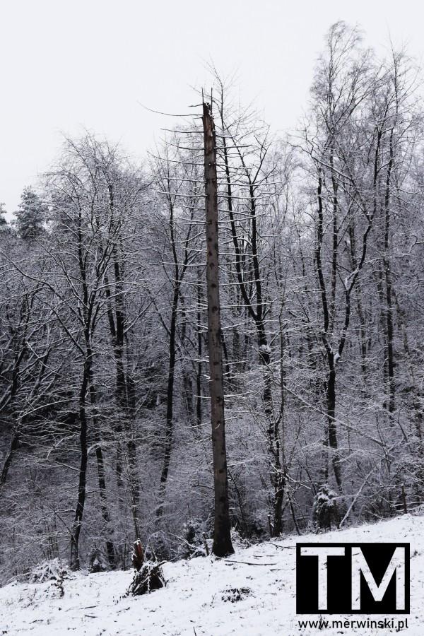 Suche drzewo zimą