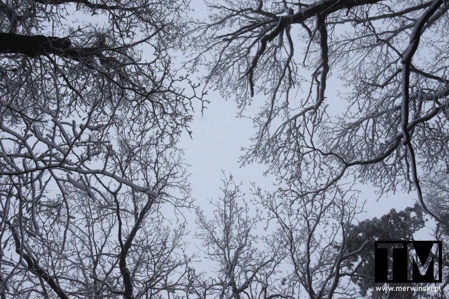 Niebo między drzewami na Wzgórzach Kiełczowskich