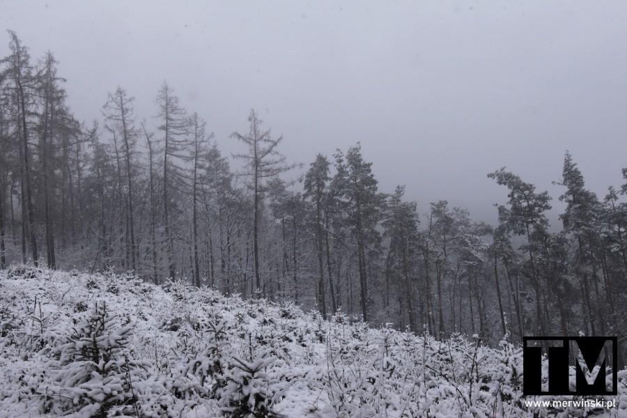 Ośnieżone zbocze Wzgórz Kiełczowskich