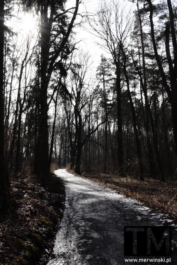 Droga leśna niedaleko Bystrzycy