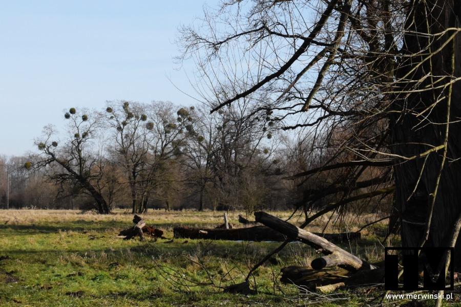 Drzewa nad Bystrzycą