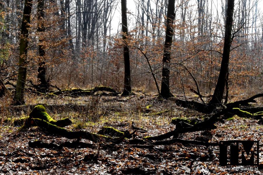 Las nad Bystrzycą