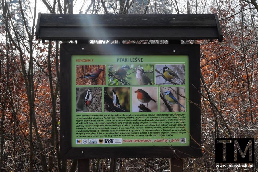 Tablica Ptaki Leśne nad Bystrzycą