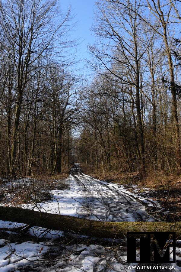 Zwalone drzewo na drogę niedaleko Gałowa