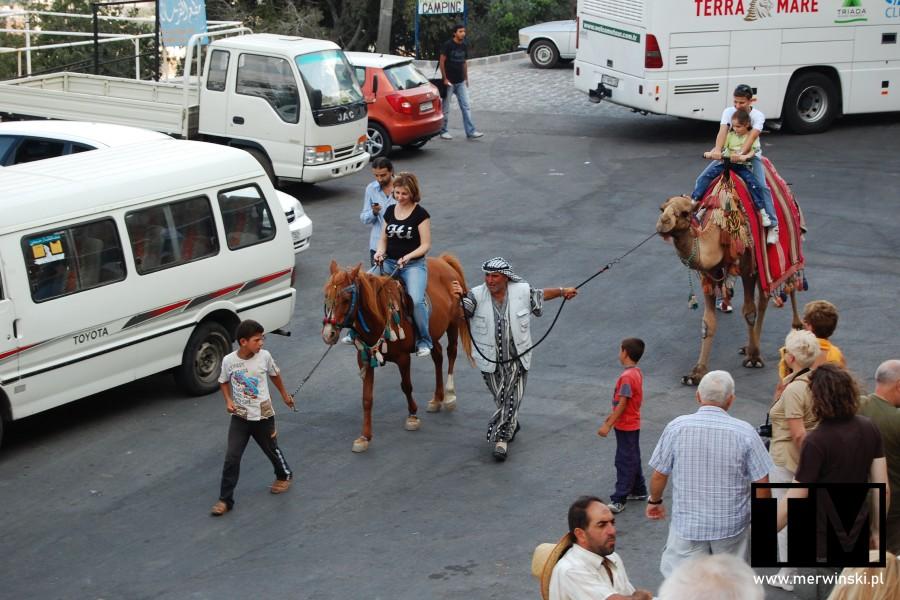 Koń i wielbłąd przed Krak des Chevaliers