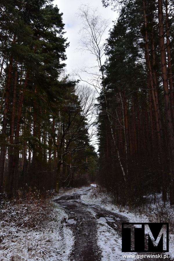 Zakręt w lesie niedaleko Miękini