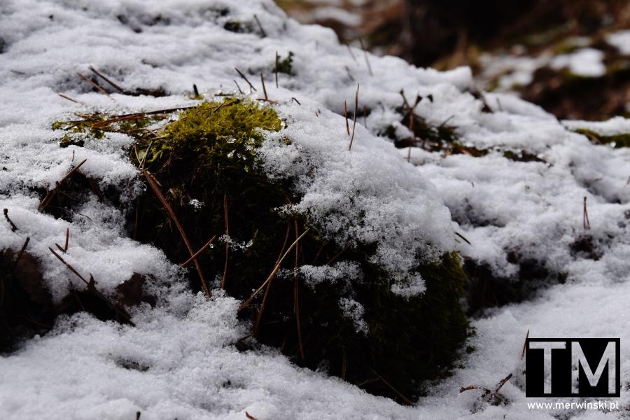 Mech pokryty śniegiem