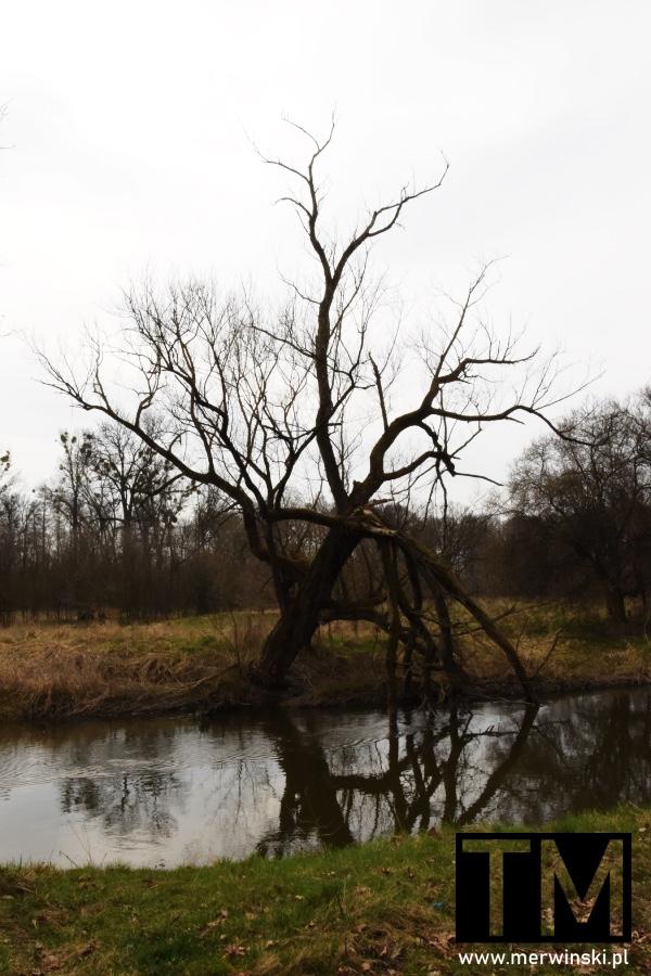 Rzeka Bystrzyca niedaleko Małkowic