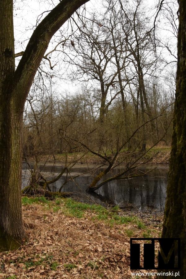 Starorzecze rzeki Bystrzycy na Dolnym Śląsku