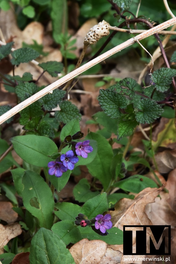 Fioletowe kwiaty w Parku Krajobrazowym Dolina Bystrzycy
