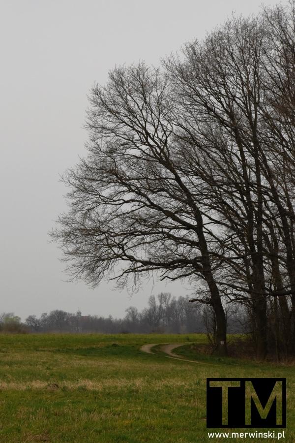 Na skraju lasu niedaleko Małkowic na Dolnym Śląsku