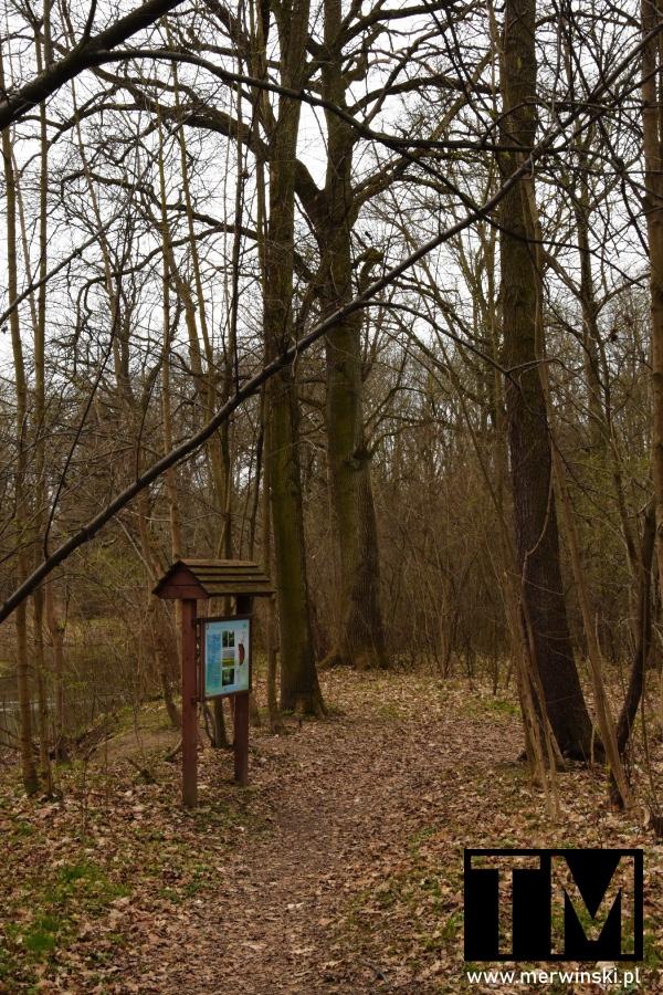 Tablica informacyjna w lesie nad Bystrzycą