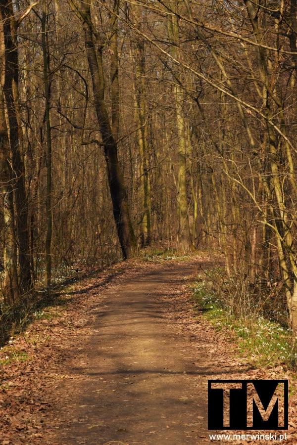Droga leśna niedaleko Sadowic
