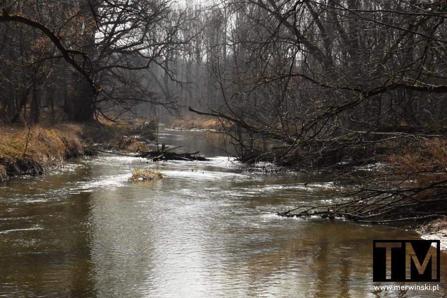 Rzeka Bystrzyca w okolicy Sadowic