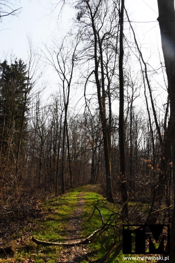 Zielona ścieżka w lesie w Parku Krajobrazowym Doliny Bystrzycy