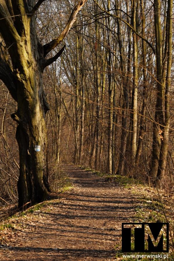 Szlak leśny w Dolinie Bystrzycy