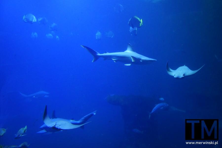 Akwarium we wrocławskim zoo