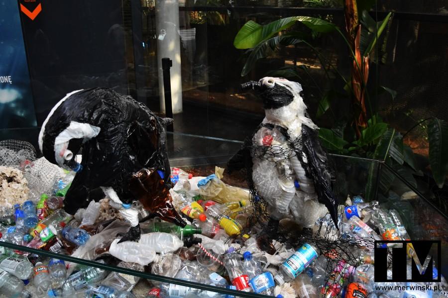 Pingwiny zrobione ze śmieci