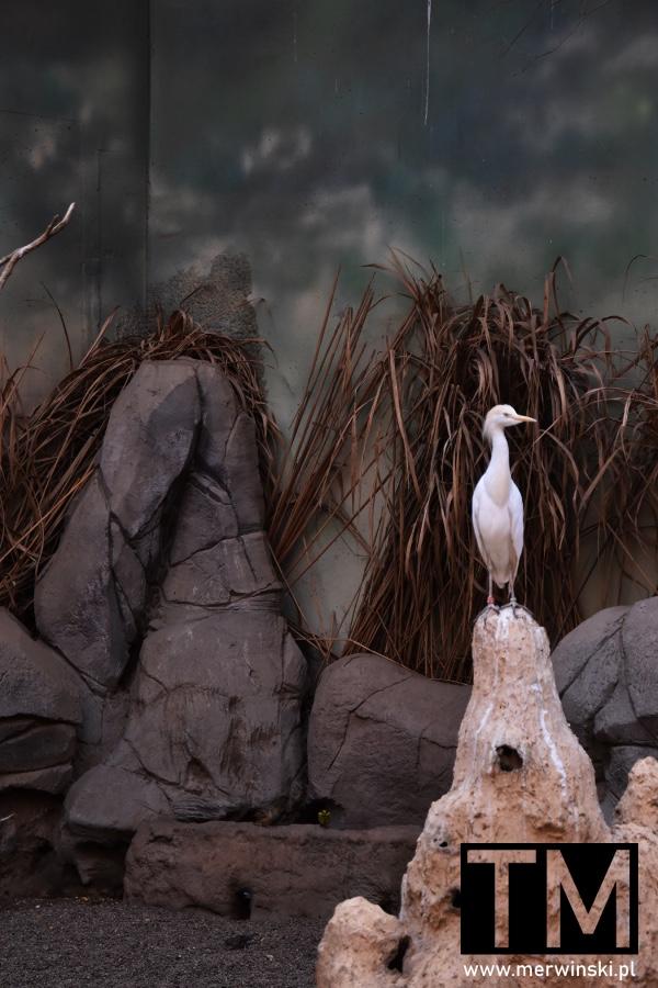 Ptak we wrocławskim Afrykarium