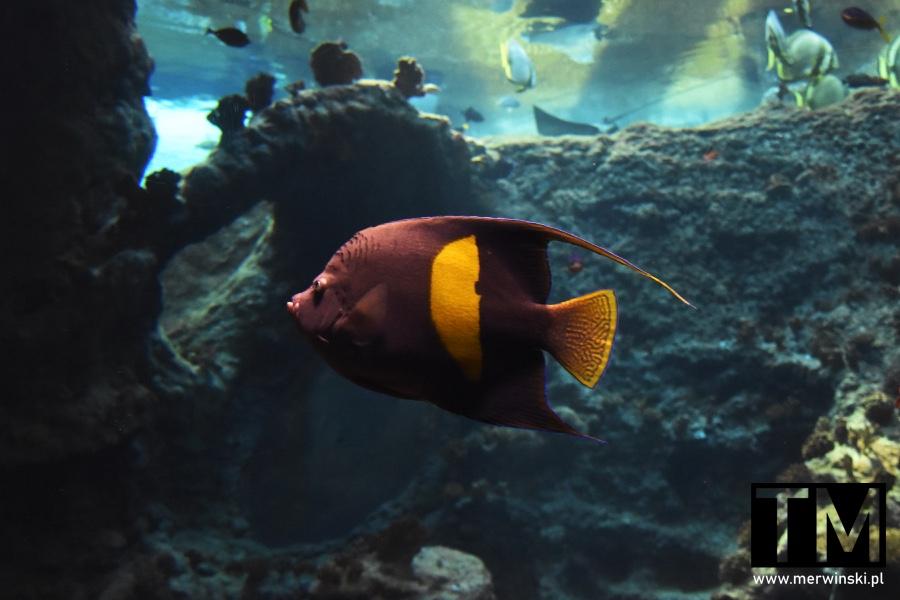 Ryba w akwarium wrocławskiego Afrykarium
