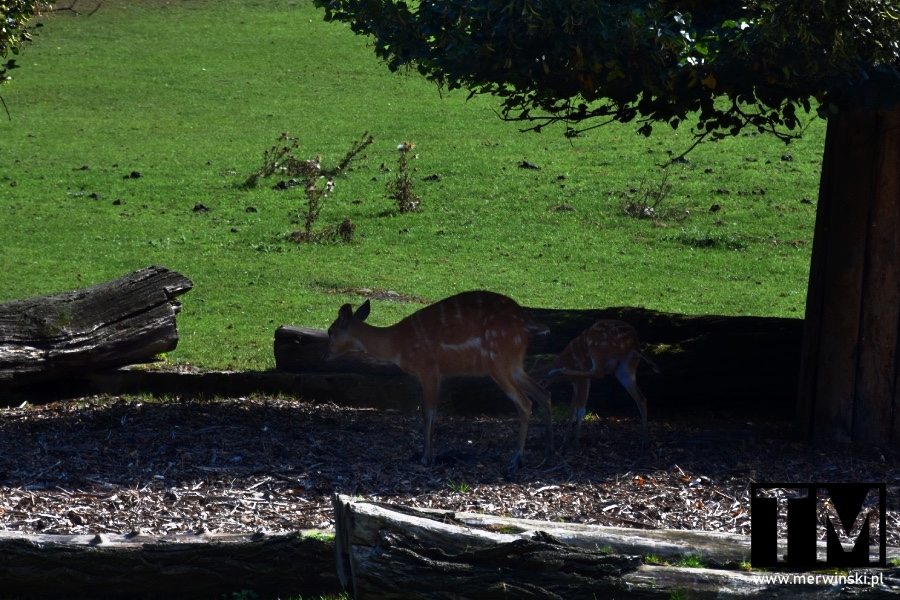 Zwierzęta na wybiegu we Wrocławiu