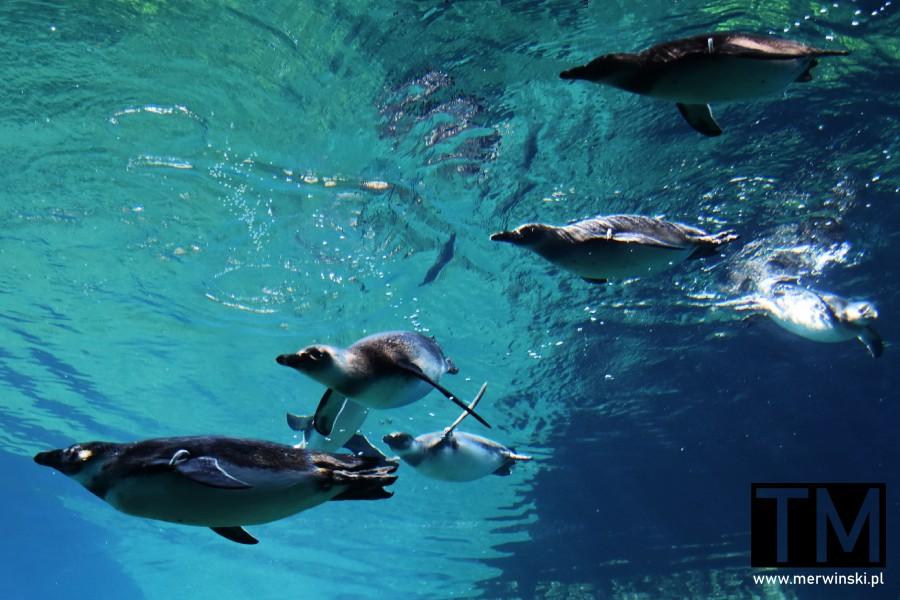 Zwierzęta wodne w ZOO we Wrocławiu