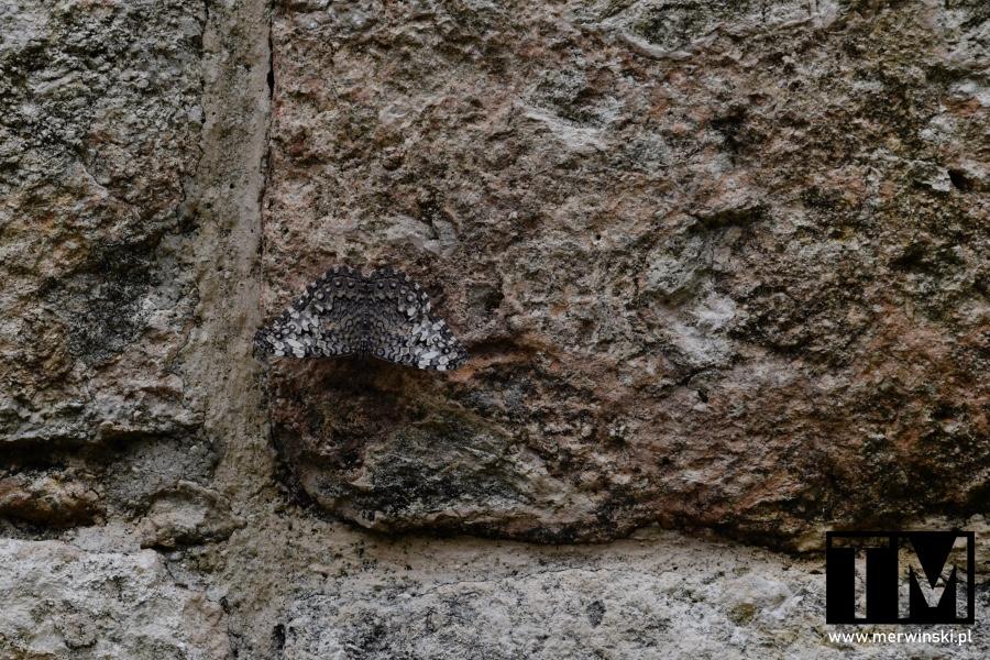 Motyl na ścianie w Ek Balam