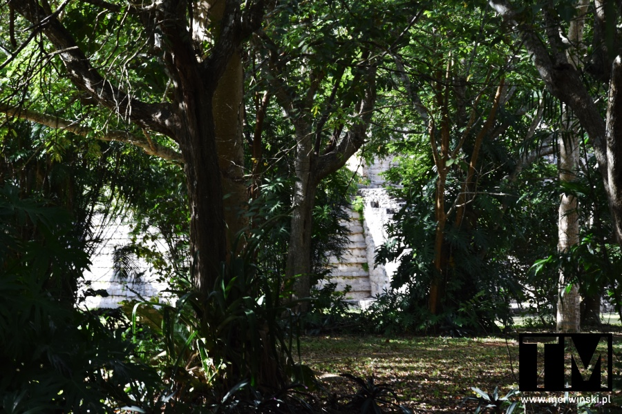 Majańskie ruiny ukryte w dżungli