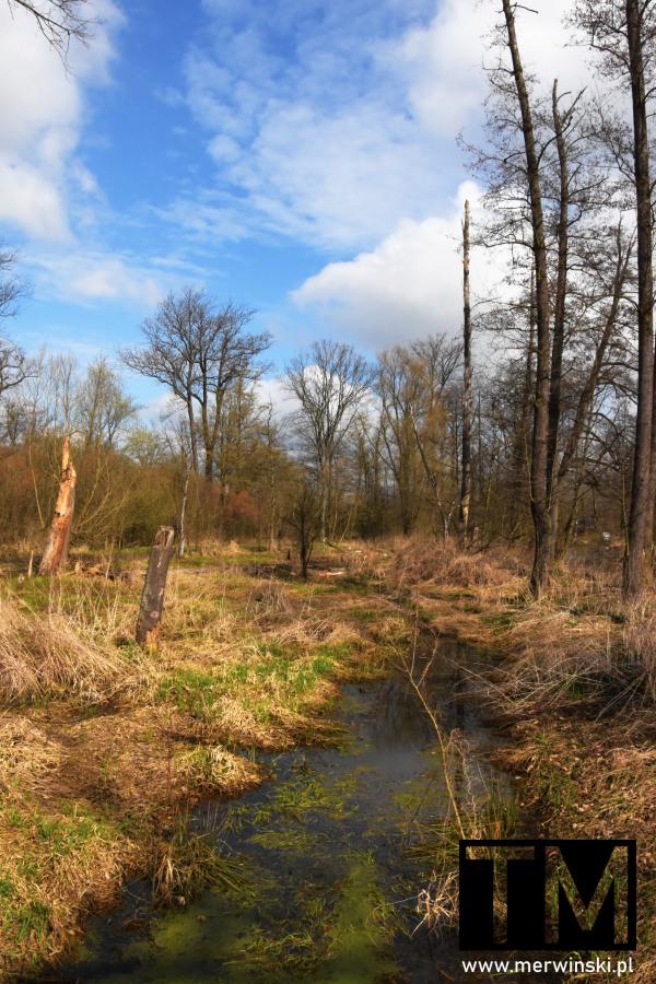 Park w Dolinie Bystrzycy w Kątach Wrocławskich