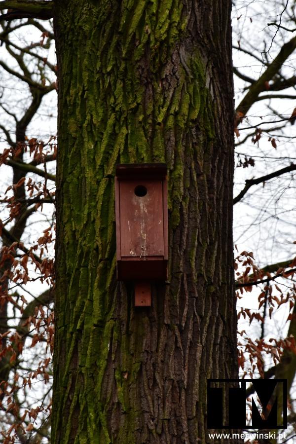 Budka dla ptaków w Dolinie Bystrzycy