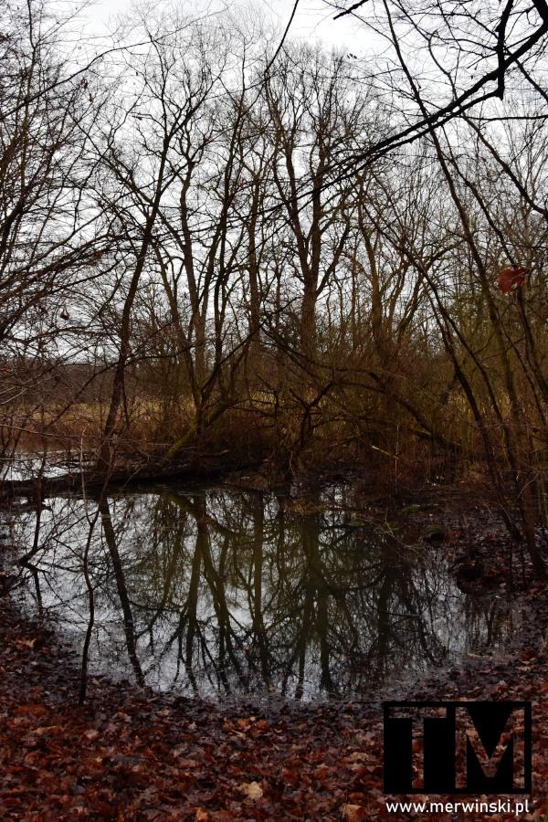 Podmokłe tereny zimą w Dolinie Bystrzycy