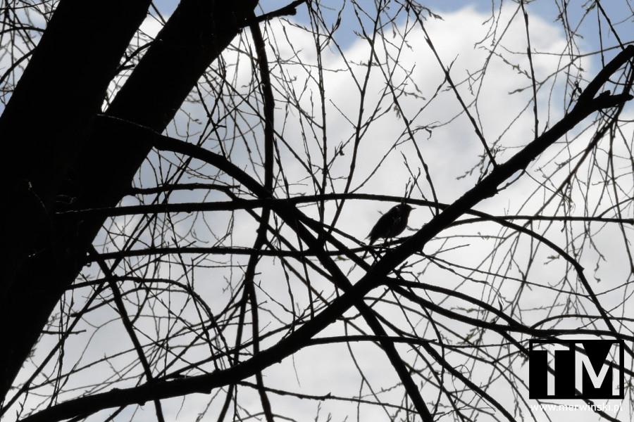 Ptak na gałęzi, Kąty Wrocławskie