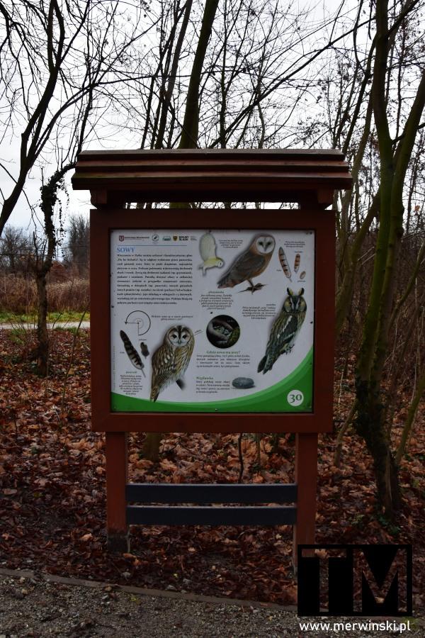 Tablica z sowami w Dolinie Bystrzycy