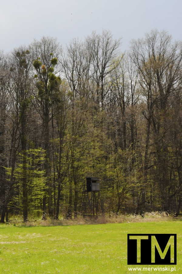 Ambona na skraju lasu niedaleko wsi Stary Górnik
