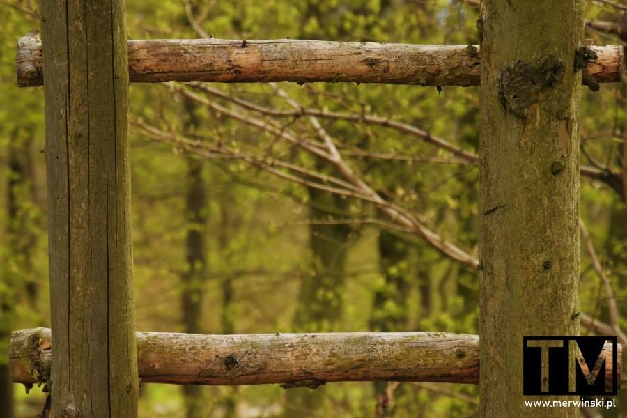 Las widziany przez drabinkę na ambonę