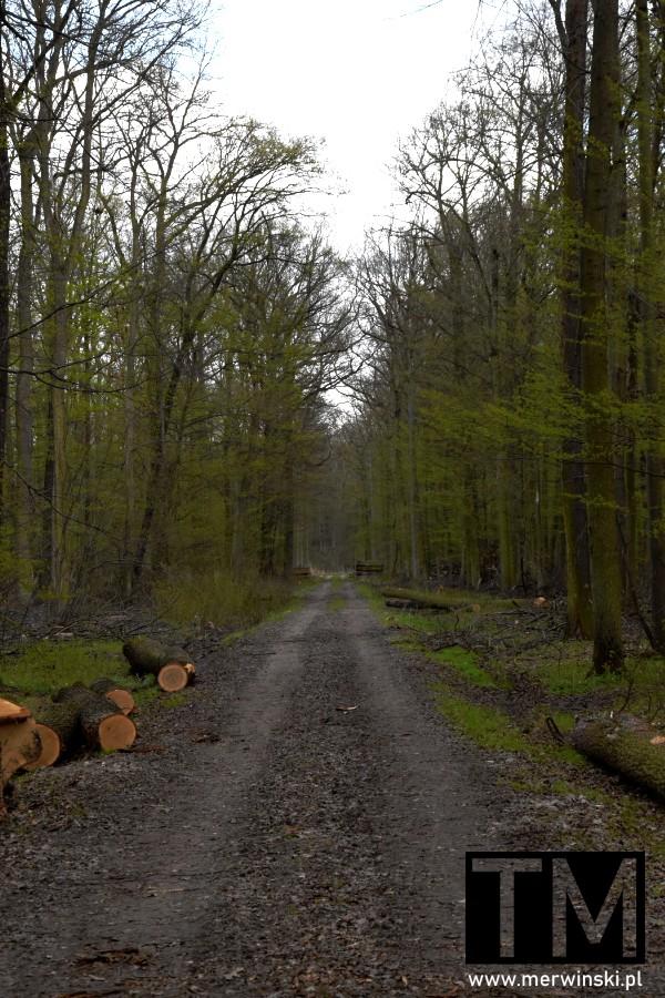 Droga w lesie Natura 2000
