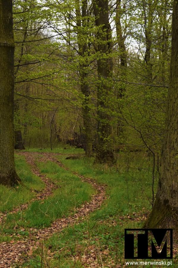 Zarośnięta droga leśna