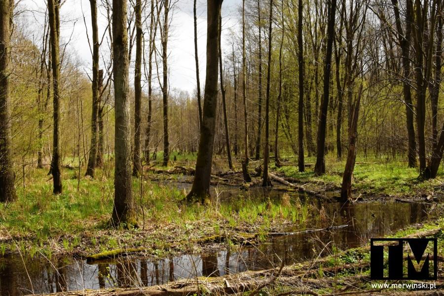 Podmokłe tereny w obszarze Natura 2000 na Dolnym Śląsku