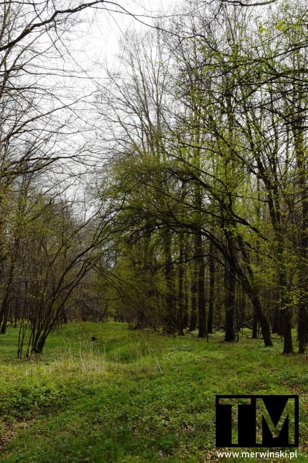 Zarośnięta ścieżka prowadząca przez las
