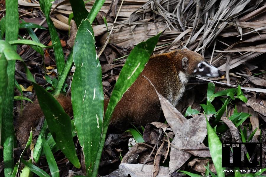 Ostronos w Meksyku na Jukatanie