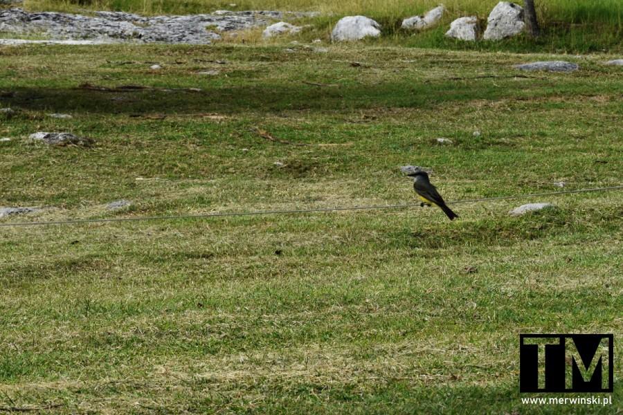 Ptak w strefie archeologicznej Tulum
