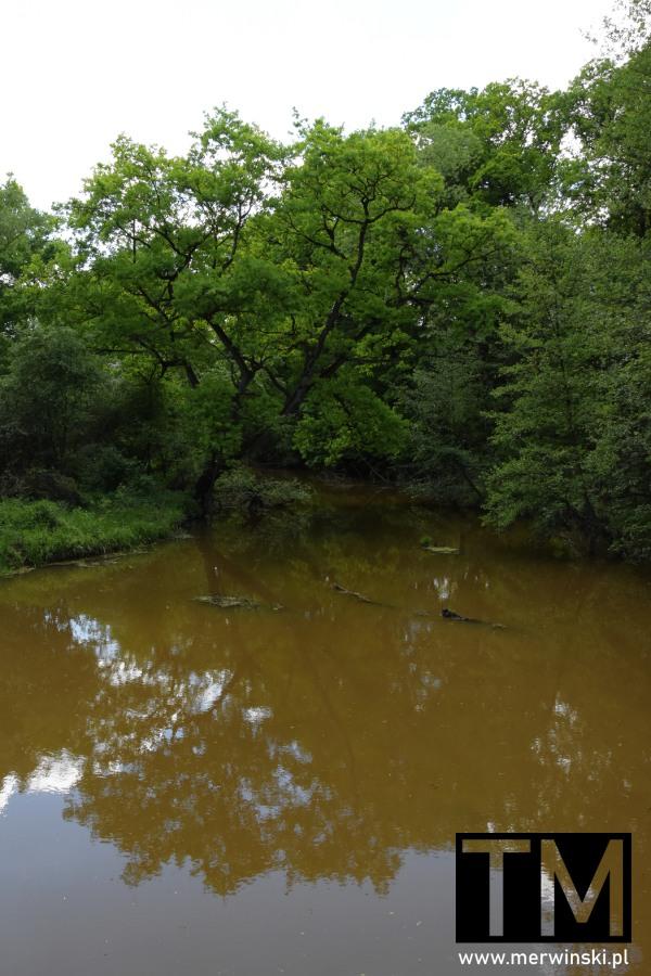 Brązowa woda niedaleko Kotowic na Dolnym Śląsku