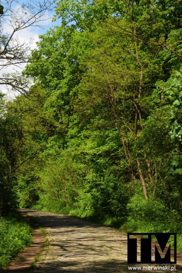 Leśna droga niedaleko Kotowic