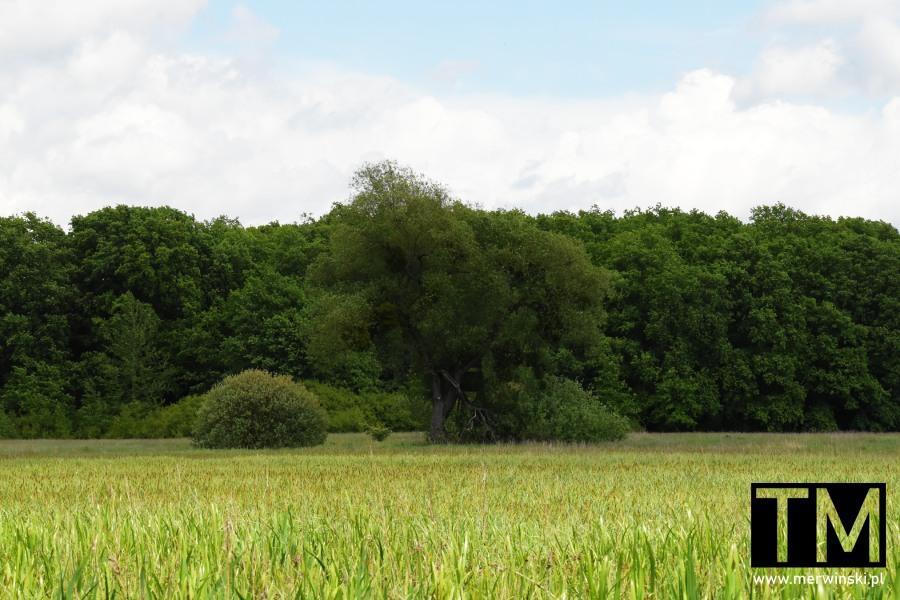 Polana i las niedaleko dolnośląskich Kotowic