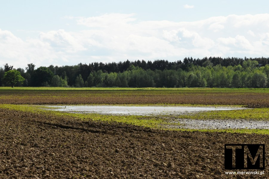 Pole zalane wodą po deszczach w okolicy Kotowic