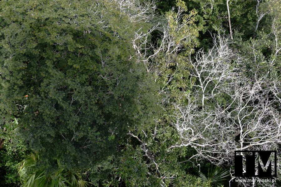 Widok na dżunglę meksykańską z lotu ptaka